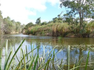 The Finniss River in the Eastern Mt Lofty Ranges
